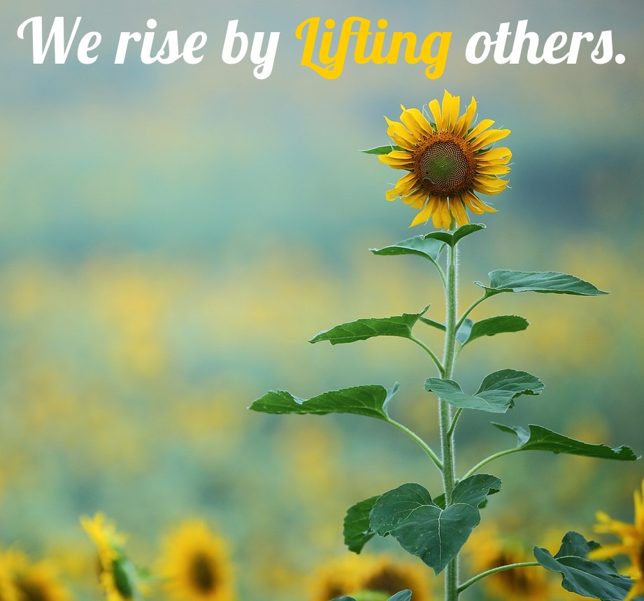 sunflower-in-a-field-mage-with-the-words-we-rise-by-lifting-others