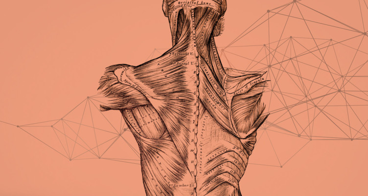 Diagrammatic-sketch-of-key-soft-tissues-in-upper-back-shoulders-and-neck
